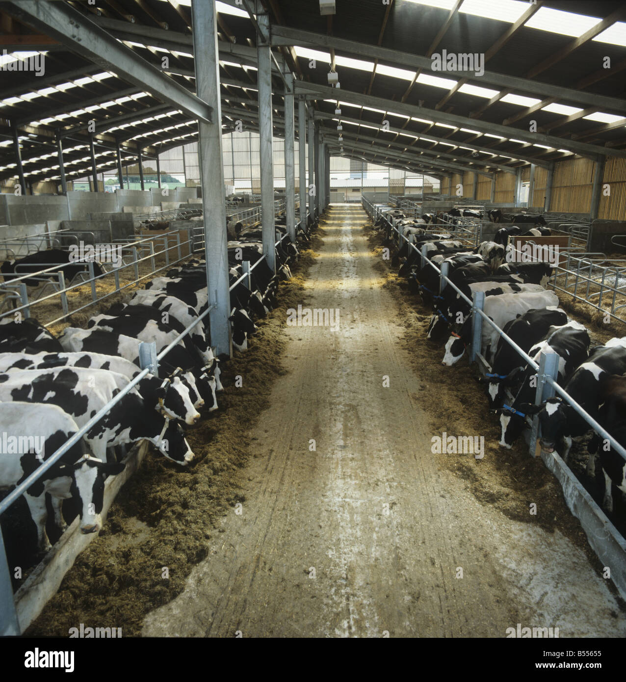 Modern Cattle Shed