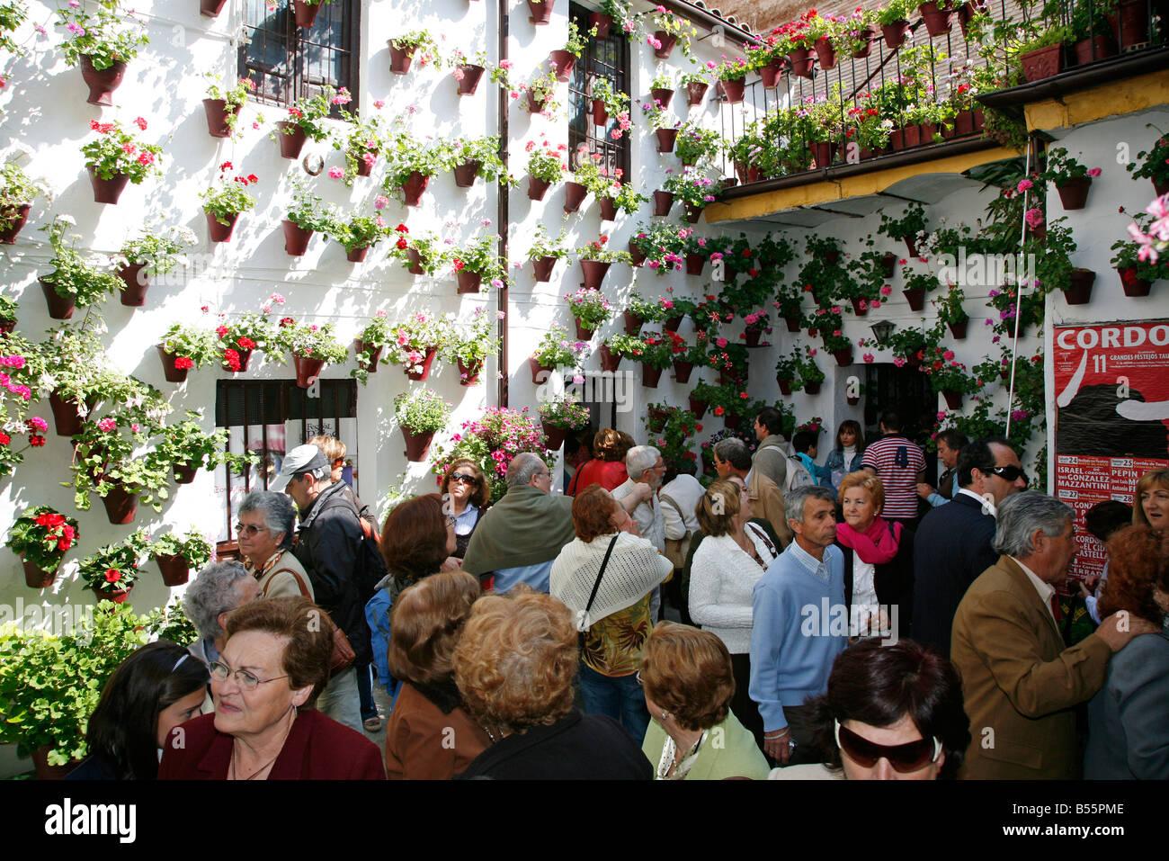 Tourists visit the festival of patios Cordoba Andalucia Spain. El Stock Photo...