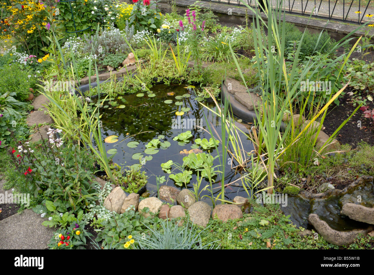 Small Garden Pond Stock Photo Royalty Free Image