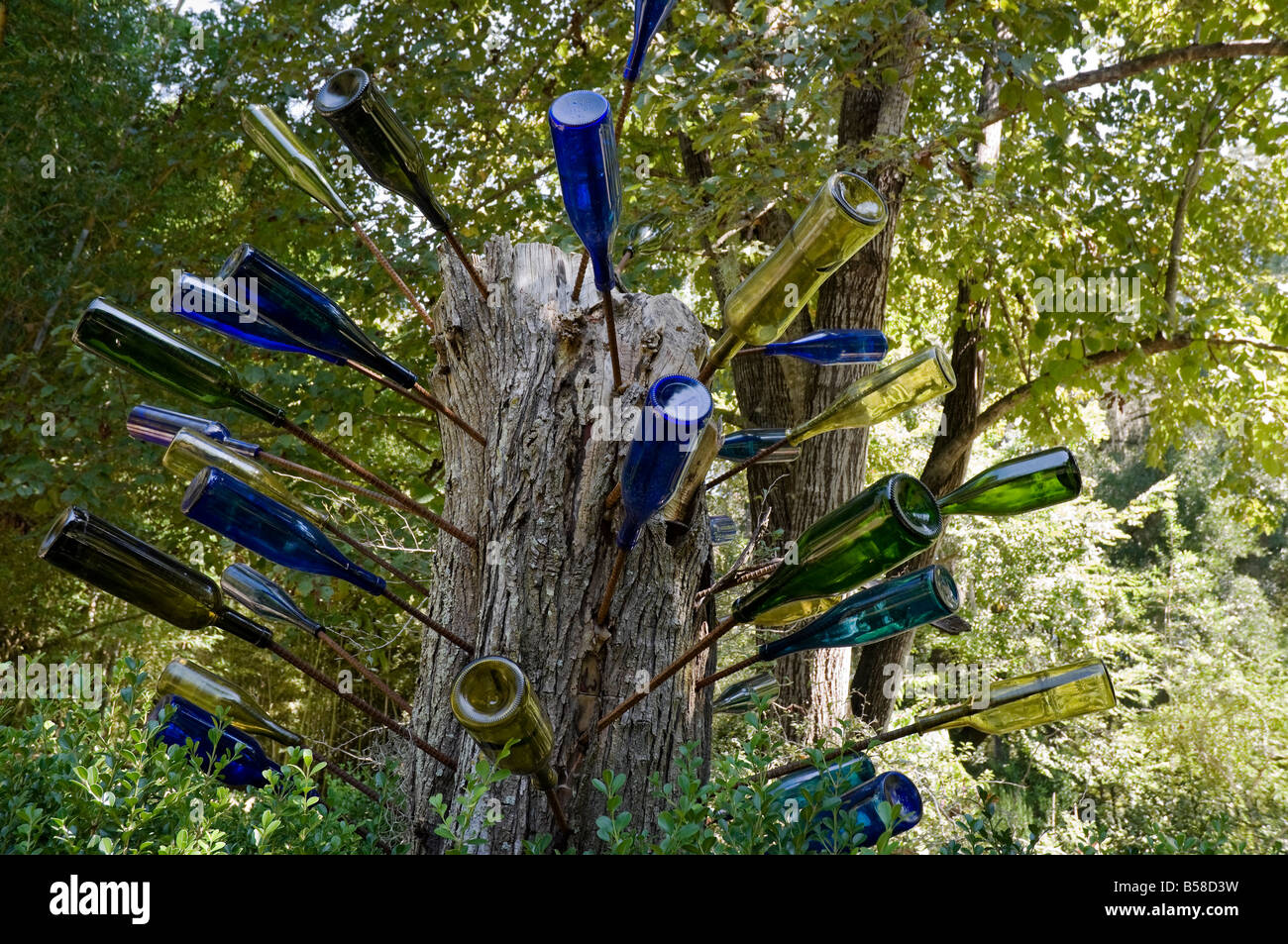 African Bottle Tree At Kanapaha Botanical Gardens Gainesville Florida Stock Photo Royalty Free