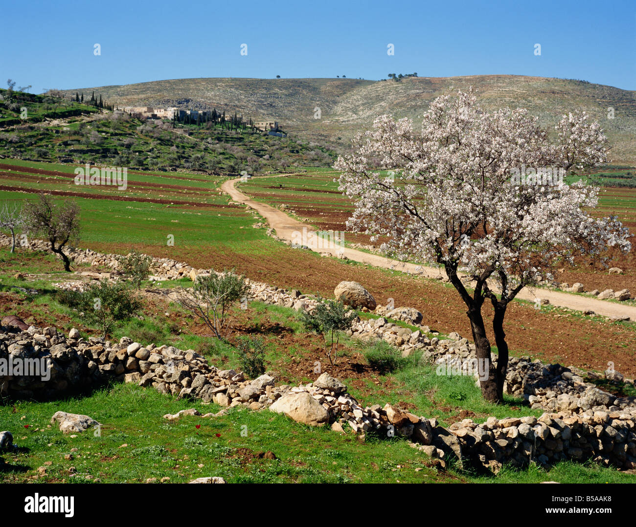 the almond tree free pdf