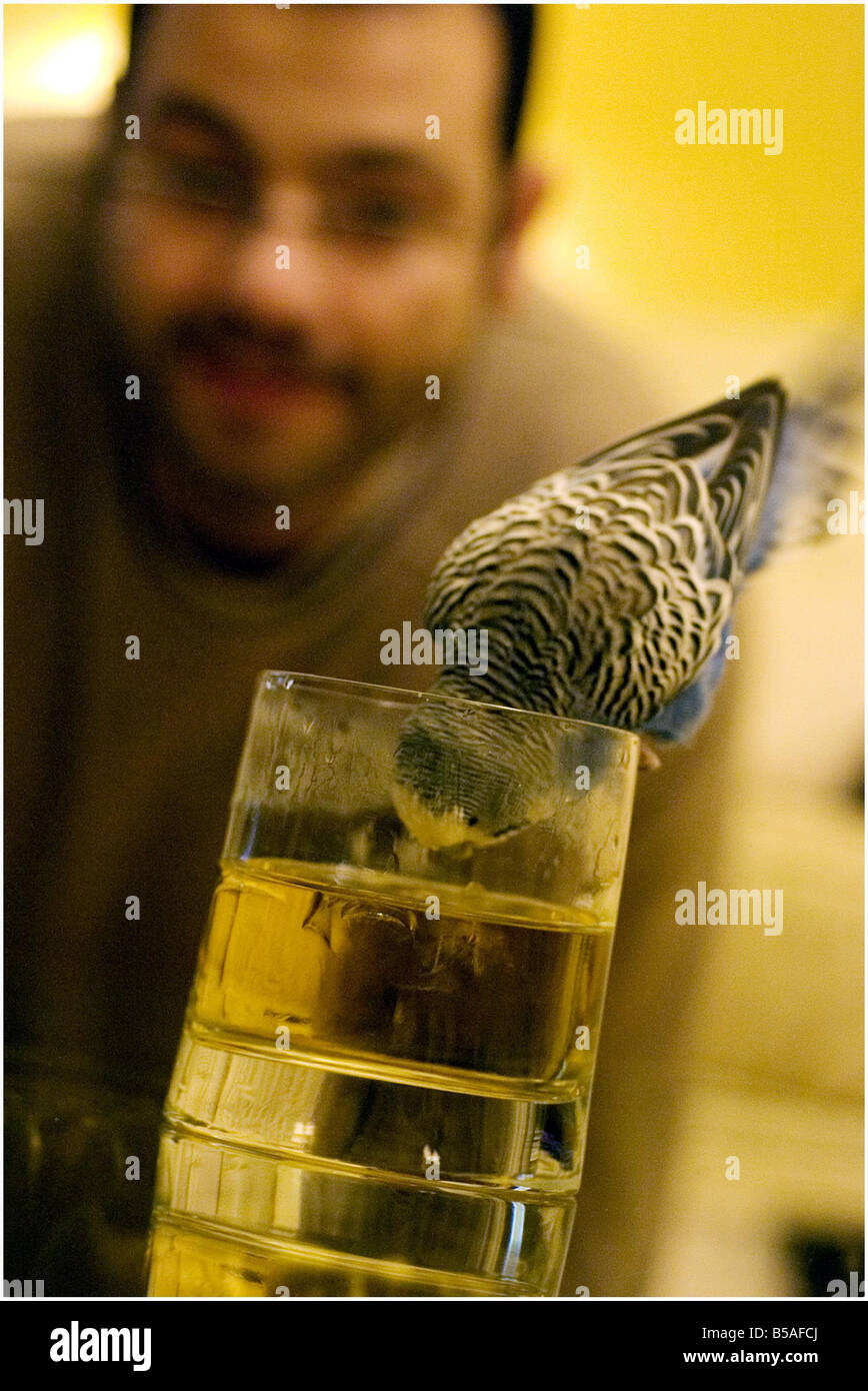PICTURE <b>Derek Blair</b> 17 year old budgie Harry enjoys a wee tipple of wine <b>...</b> - picture-derek-blair-17-year-old-budgie-harry-enjoys-a-wee-tipple-of-B5AFCJ