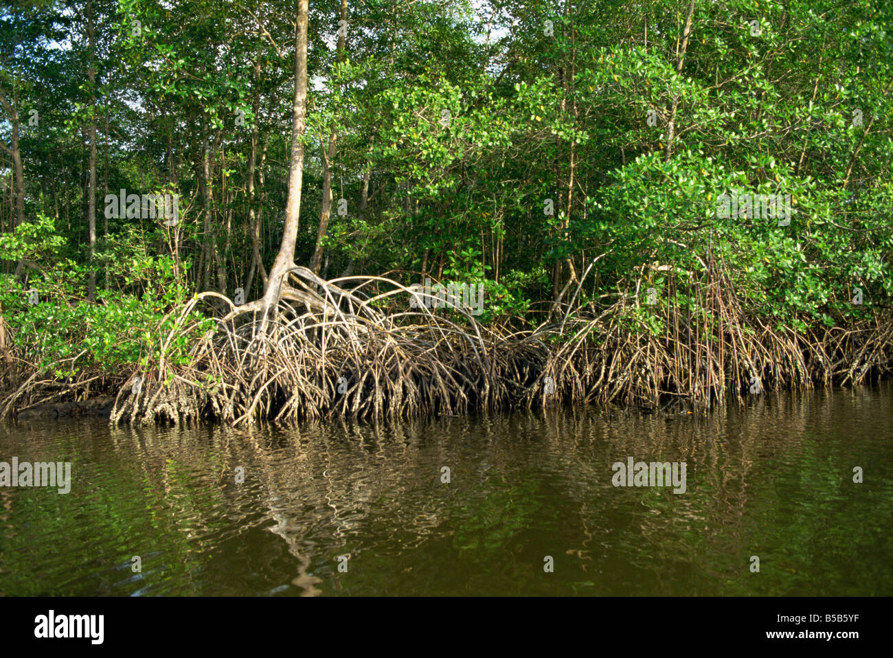 caroni swamp Welcome to the caroni bird sanctuary  the caroni swamp is the second  largest mangrove wetland in trinidad and tobago it is located on the west coast  of.