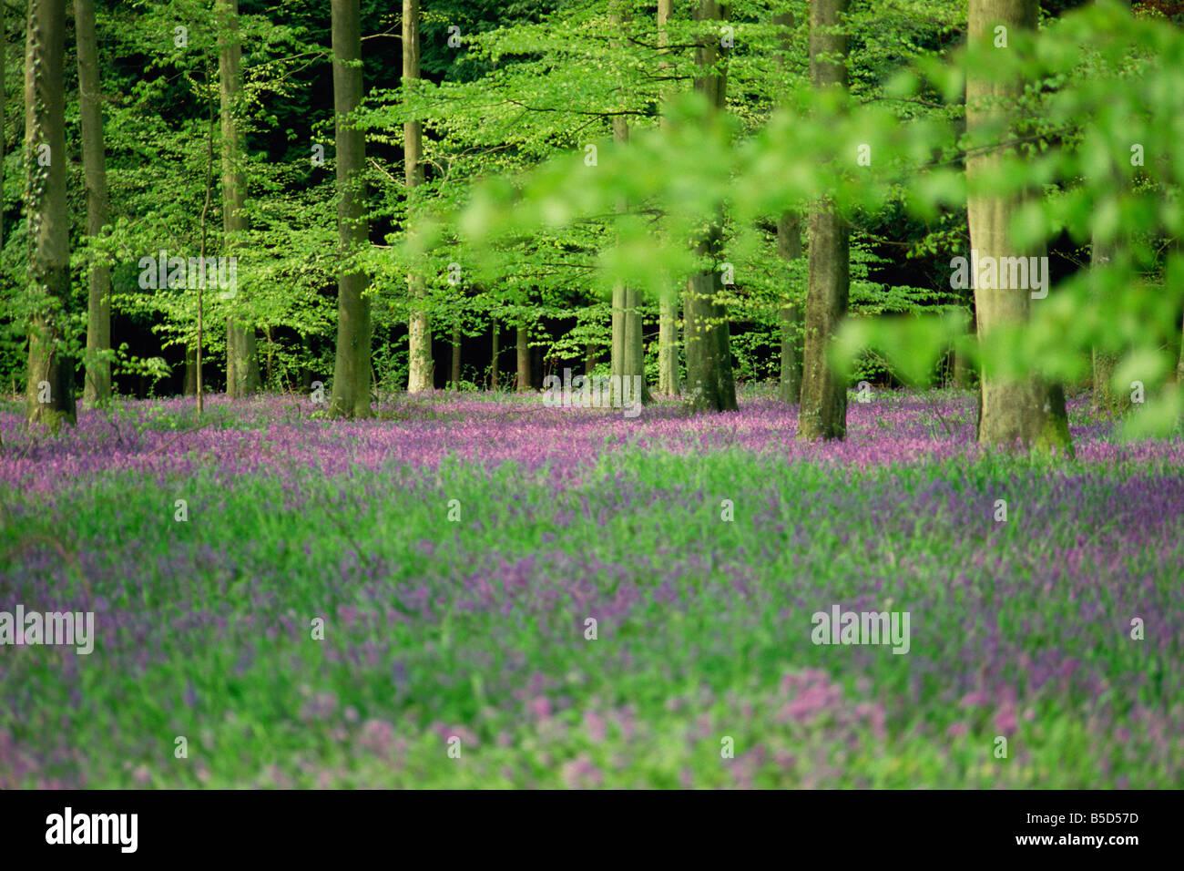 B Calm Acres Wild Flowers In Spring...