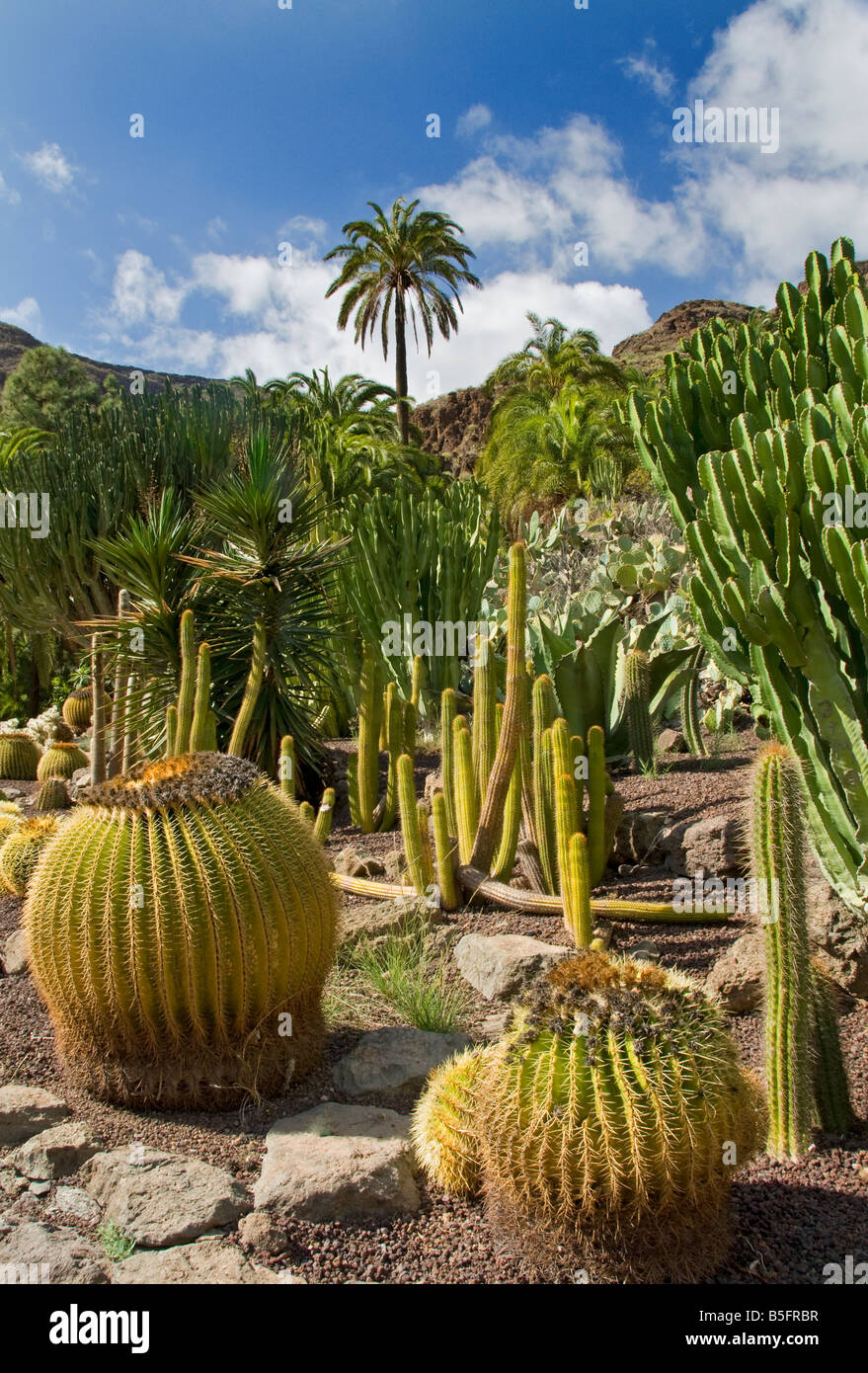 Palmitos Park with various cacti and palm trees Maspalomas Gran Stock Photo, ...