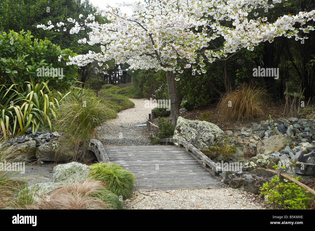 Miyazu Japan  City new picture : Spring Blossom Miyazu Japanese Garden Nelson South Island New Zealand ...