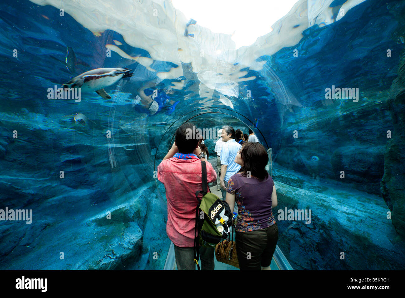 people walking through penguin observation tunnel in