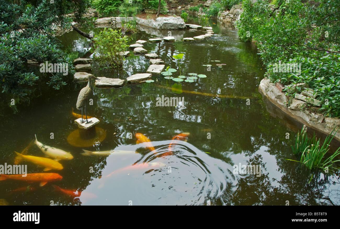 Stock Photo   Texas Hill Country Austin Zilker Botanical Garden Taniguchi Japanese  Garden Koi Pond