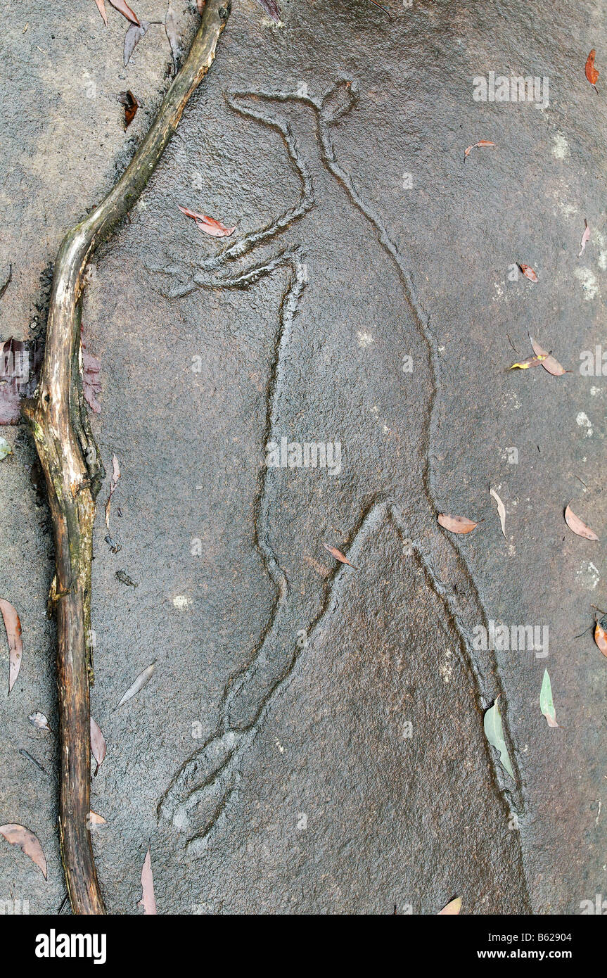 Aboriginal rock carving of a kangaroo blue mountains new