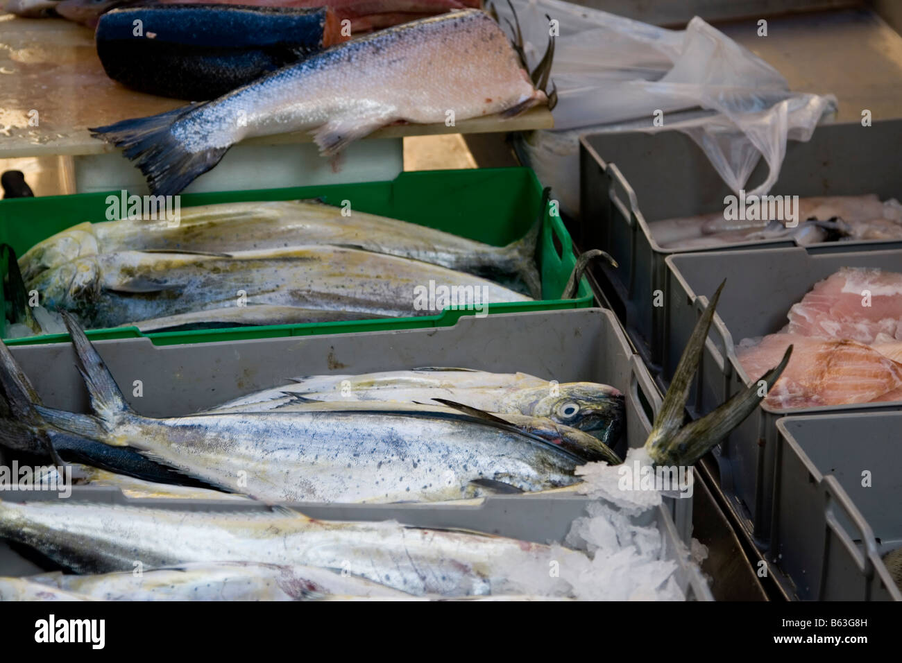 dolphin fish in a crate at a fishstall in the open air food market