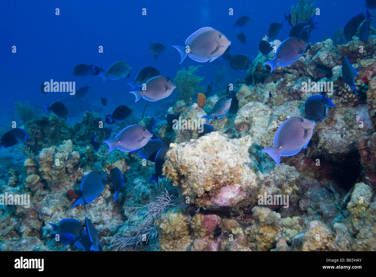 Cayman islands grand cayman island underwater view of for Fishing grand cayman