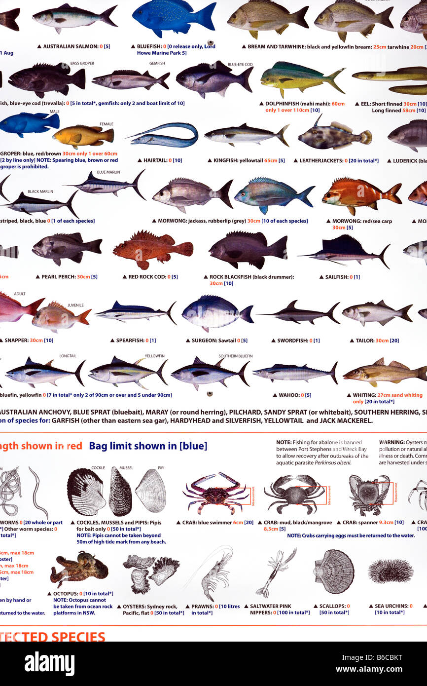 Saltwater fish species images for Florida fish size limits