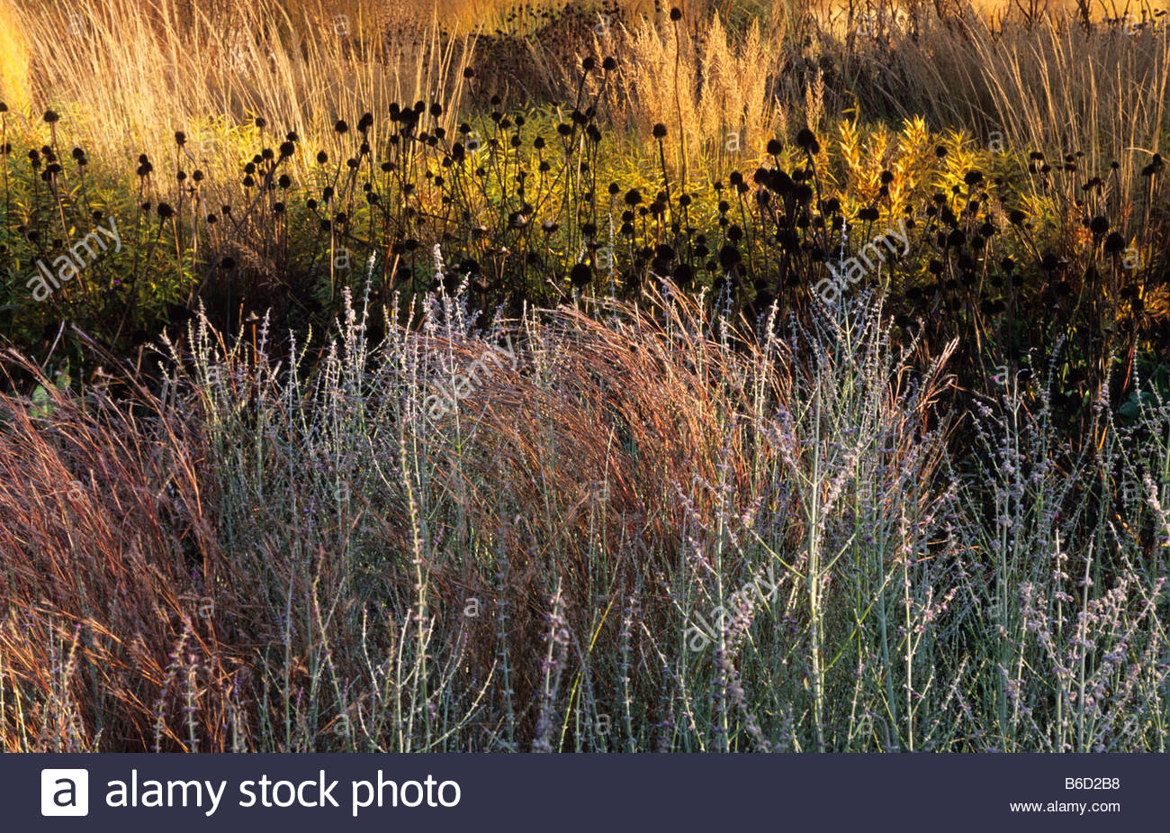 Rhs wisley surrey design piet oudolf prairie planting with for Piet oudolf fall winter spring summer fall