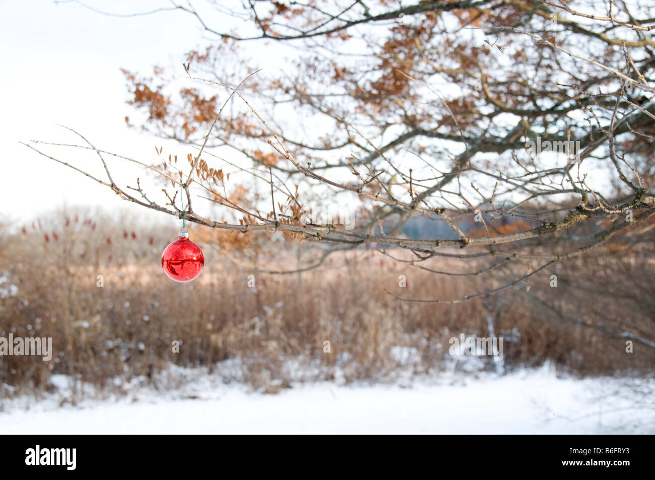 Red glass ball ornaments - Red Glass Ball Ornament Hanging On Tree Outside