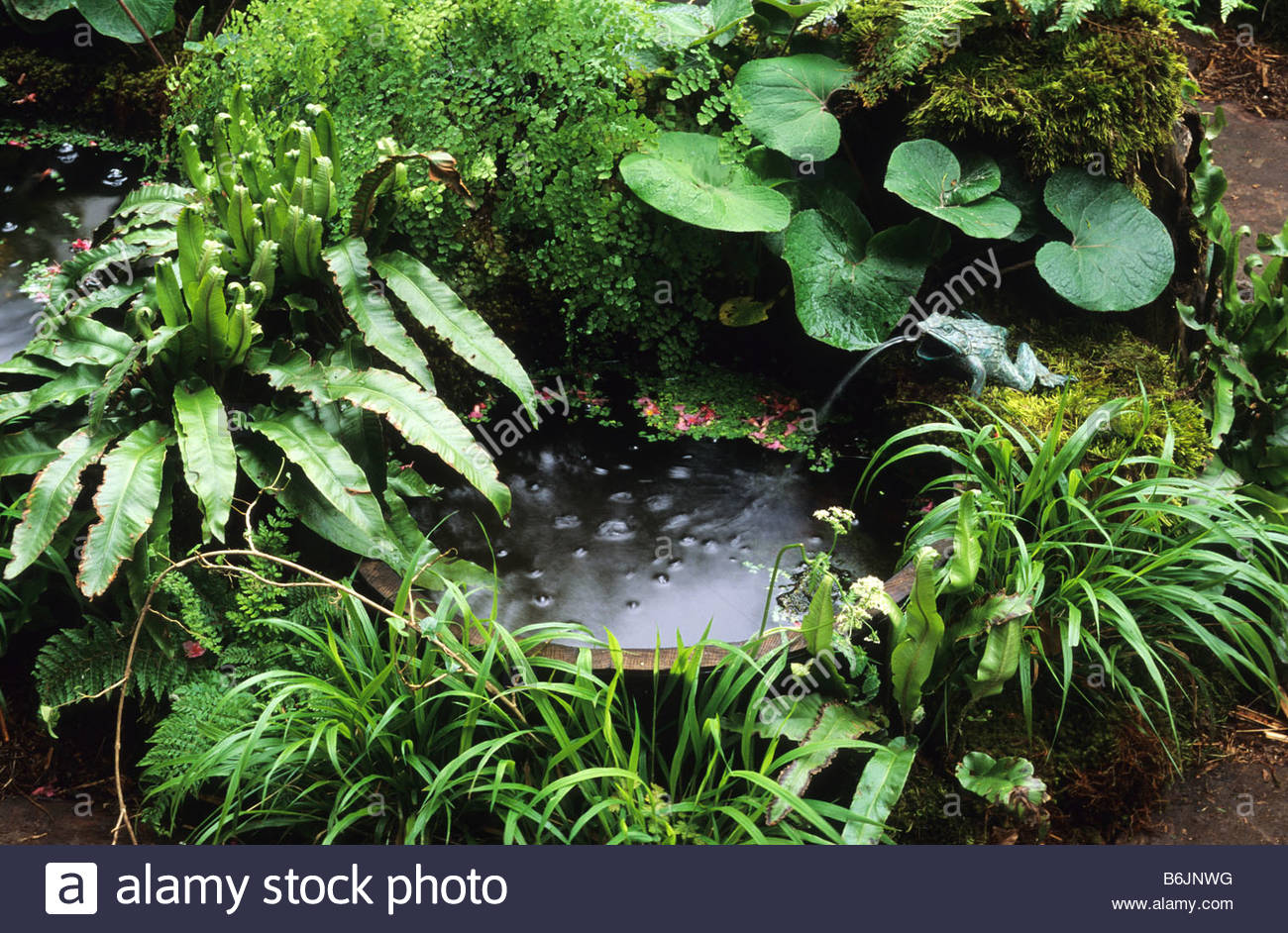 Water Feature Wooden Half Barrel Pond With Fountain And Shade Loving Stock Photo Royalty Free