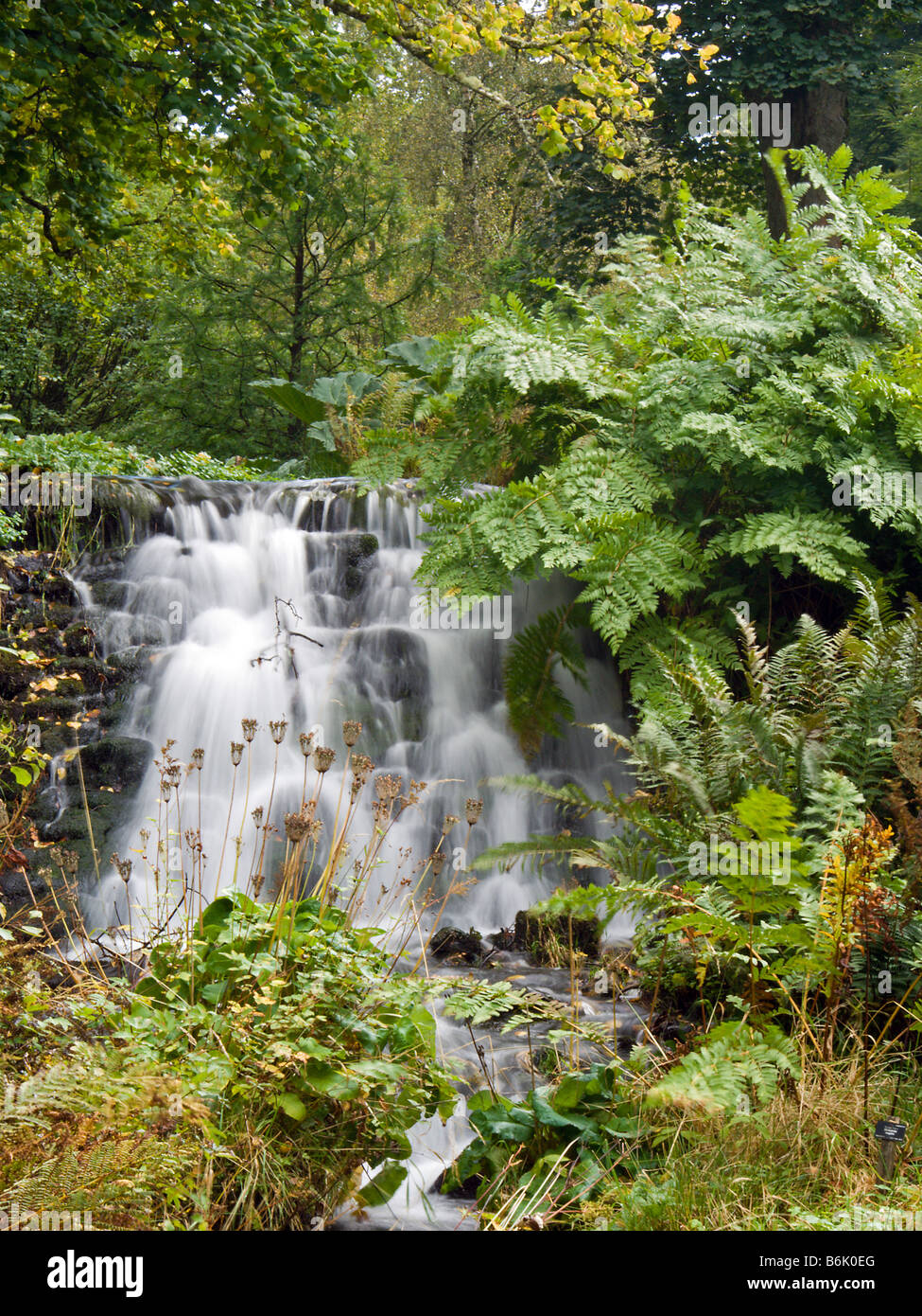 Trees and ferns at one of the water falls in dawyck for Stobo water gardens