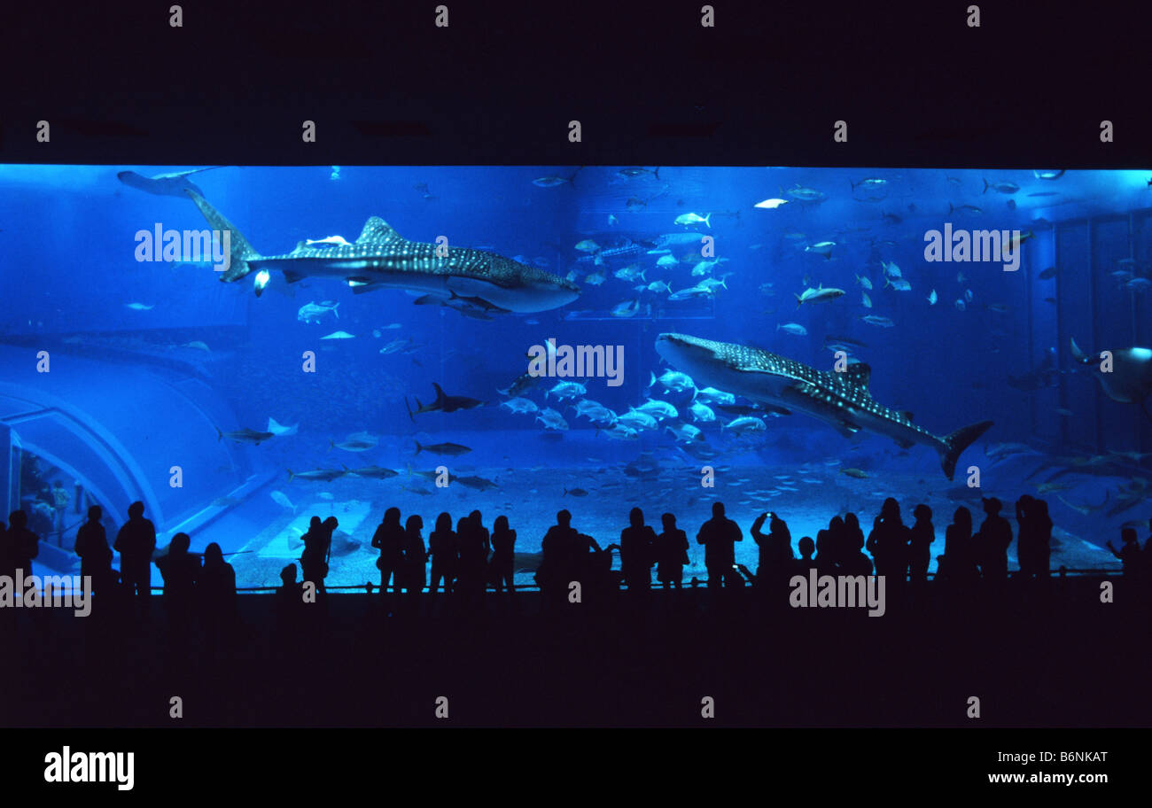 Fish tank japan - Main Tank Window The Largest Aquarium Window In The World At Okinawa Churaumi Aquarium Japan Tank Contains 3 Whale Sharks