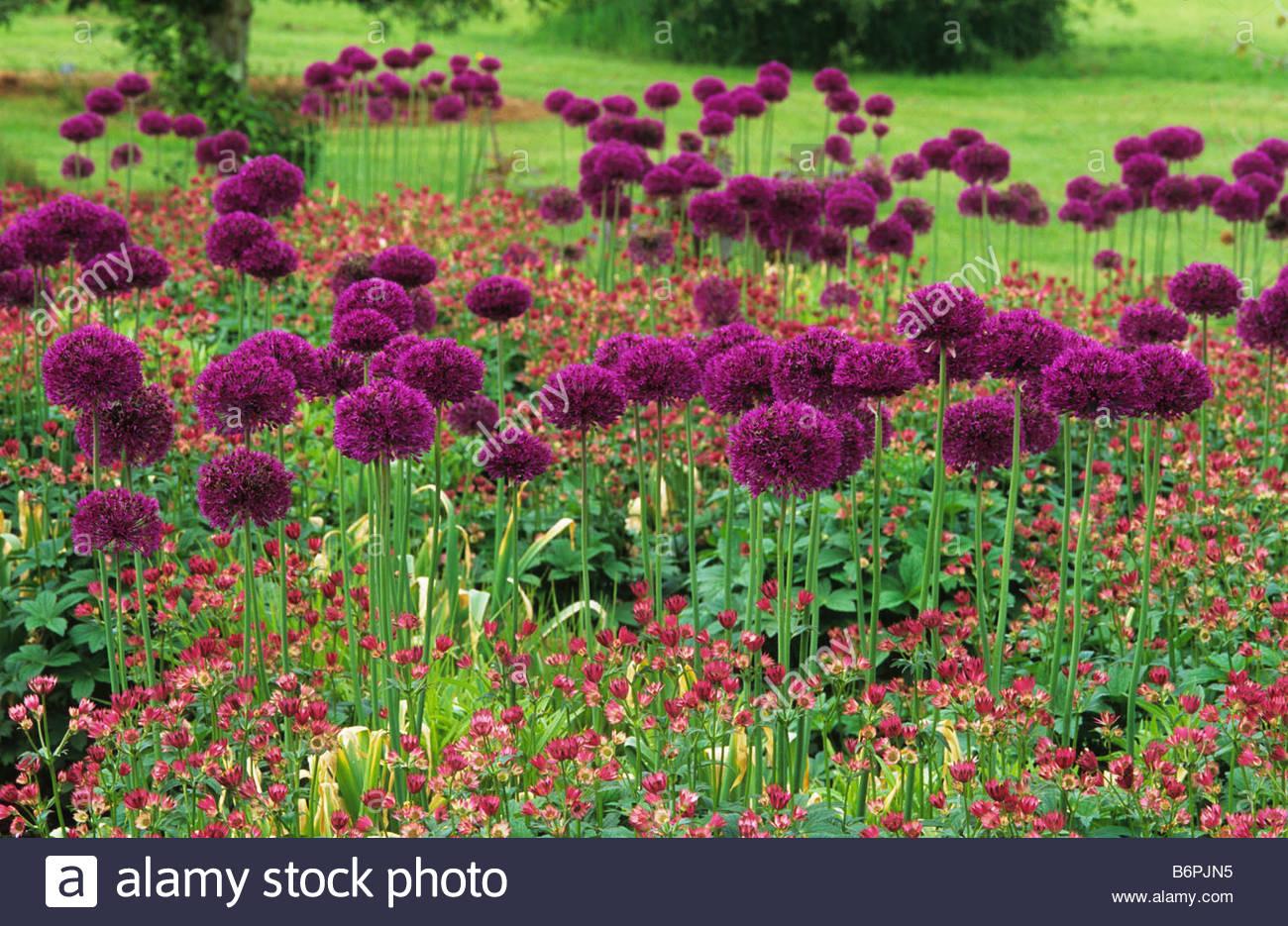 Rhs wisley surrey design piet oudolf colour coordinated for Piet oudolf pflanzen