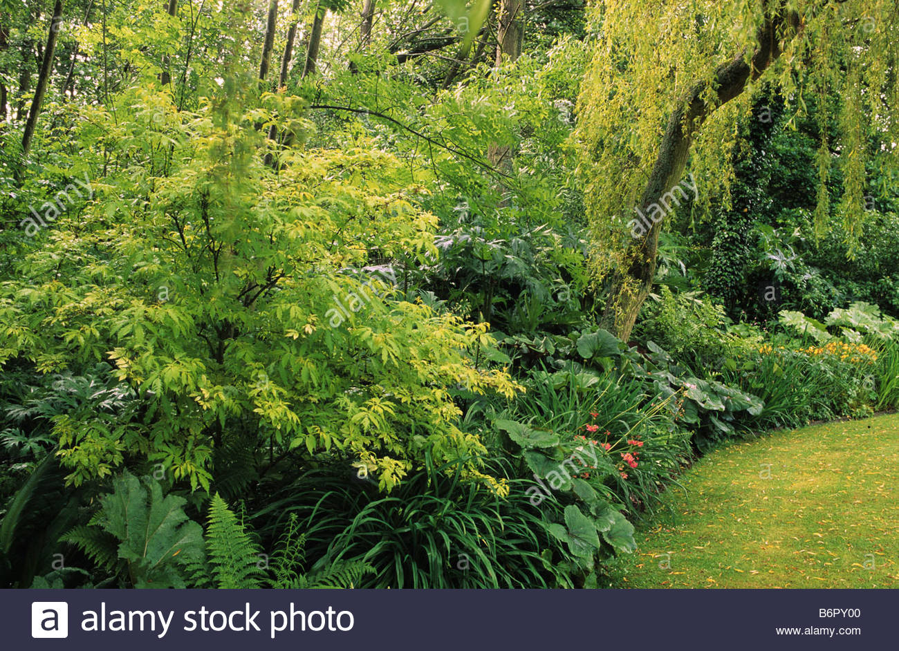 Bog farm kent shady wet woodland edge garden with shrubs for Garden trees kent