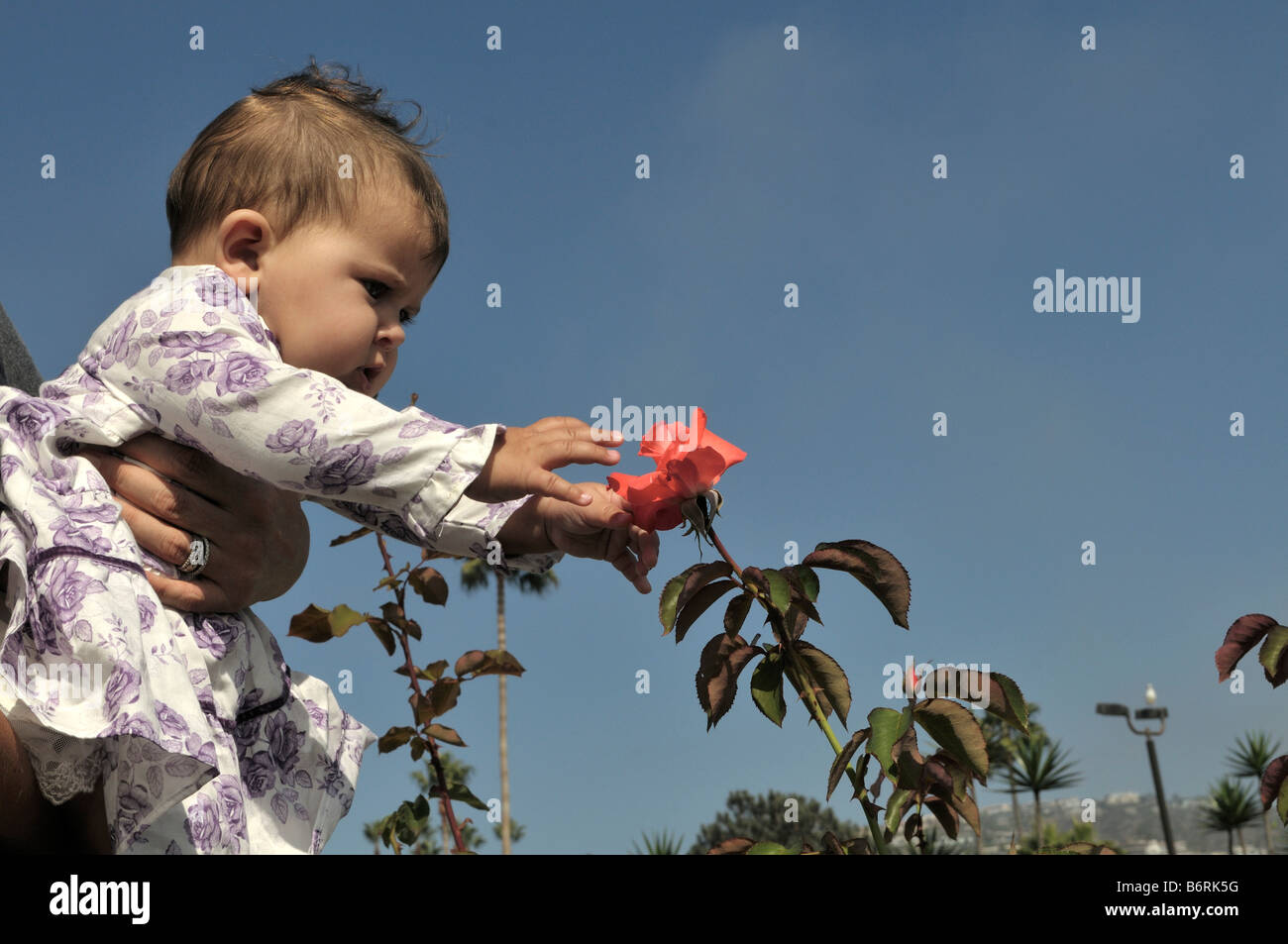 American baby girl held near a beautiful red flower Stock Photo ...