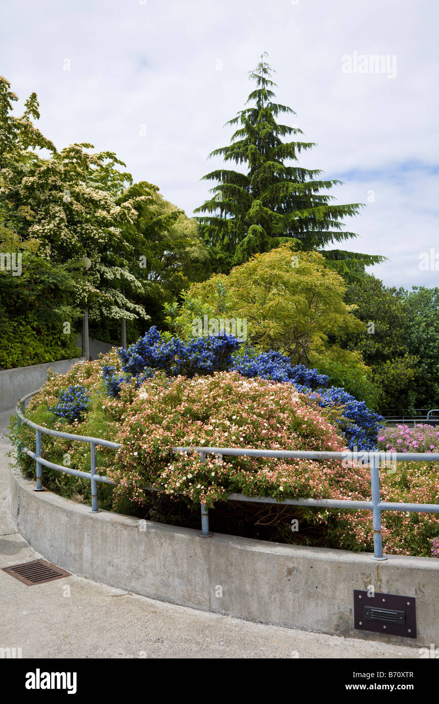 Carl S English Jr Botanical Gardens At Ballard Locks In Salmon Bay Stock Photo Royalty Free