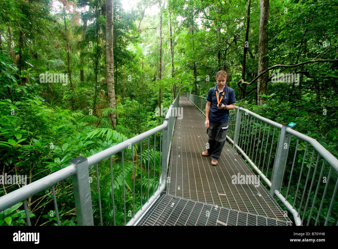 Elevated walkways take visitors through the canopy of the Daintree National Park at the Daintree Discovery Centre & Elevated walkways take visitors through the canopy of the Daintree ...