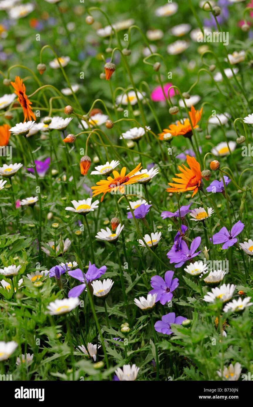 wildflower mix bohemian rhapsody white orange purple flower blossom stock photo royalty free. Black Bedroom Furniture Sets. Home Design Ideas
