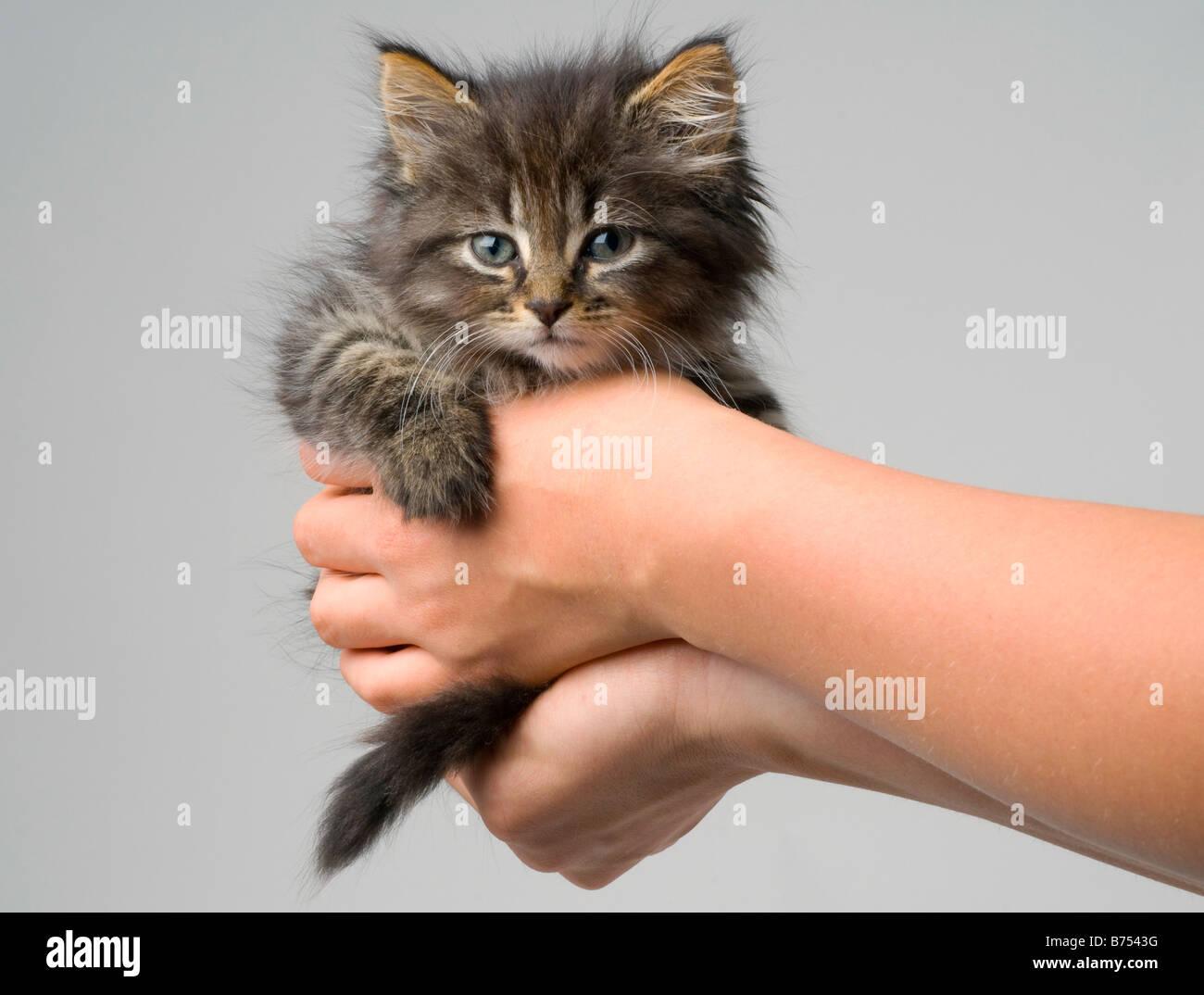 cat stevens tour