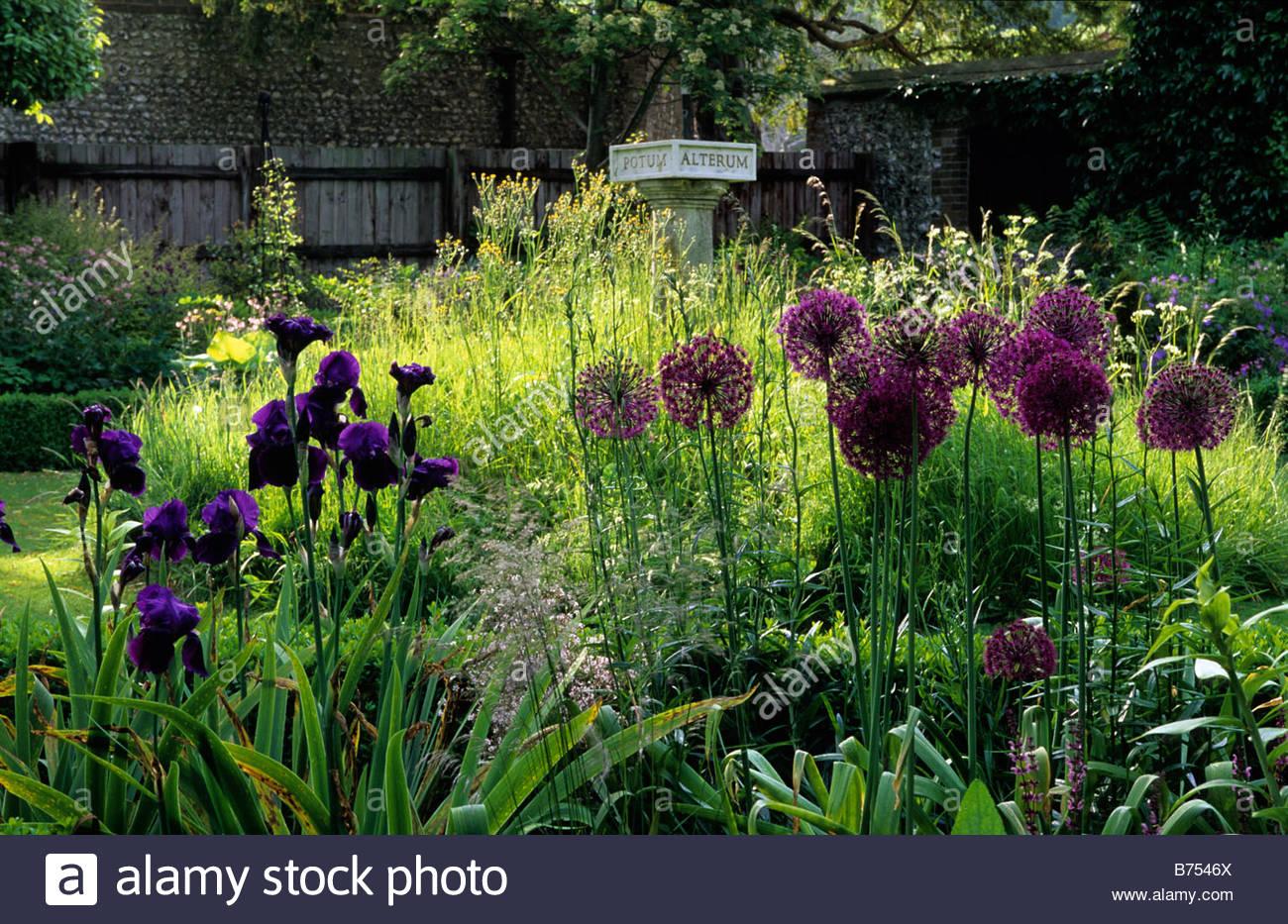 Elegant ... Gardeners Cottage West Dean Sussex Semi Shady Garden With Allium  Giganteum And Iris Deep Black Sundial