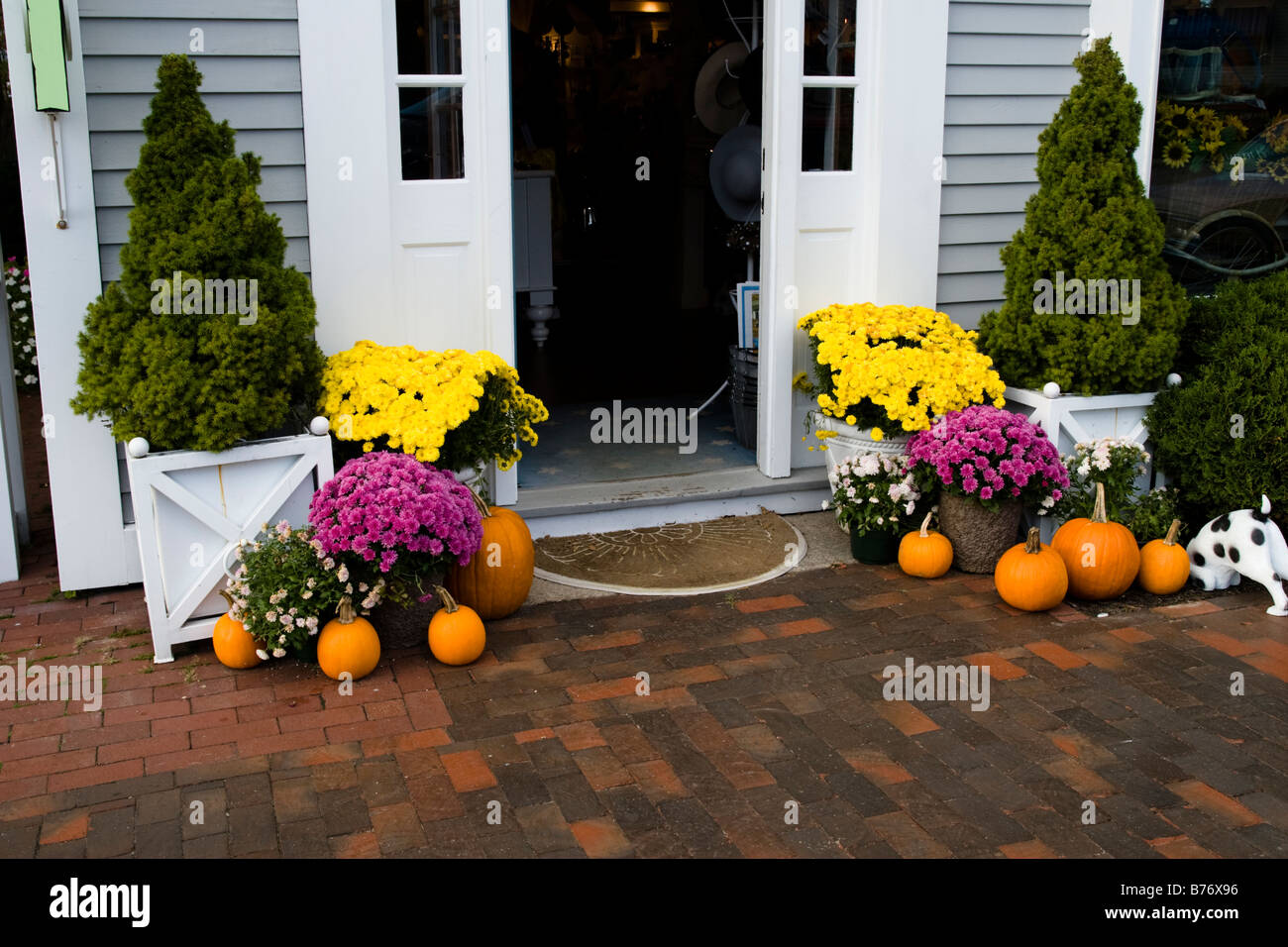 Halloween Pumpkins and Chrysanthemums on doorstep in Kennebunkport Maine ME New England United States of America USA & Halloween Pumpkins and Chrysanthemums on doorstep in Kennebunkport ... pezcame.com