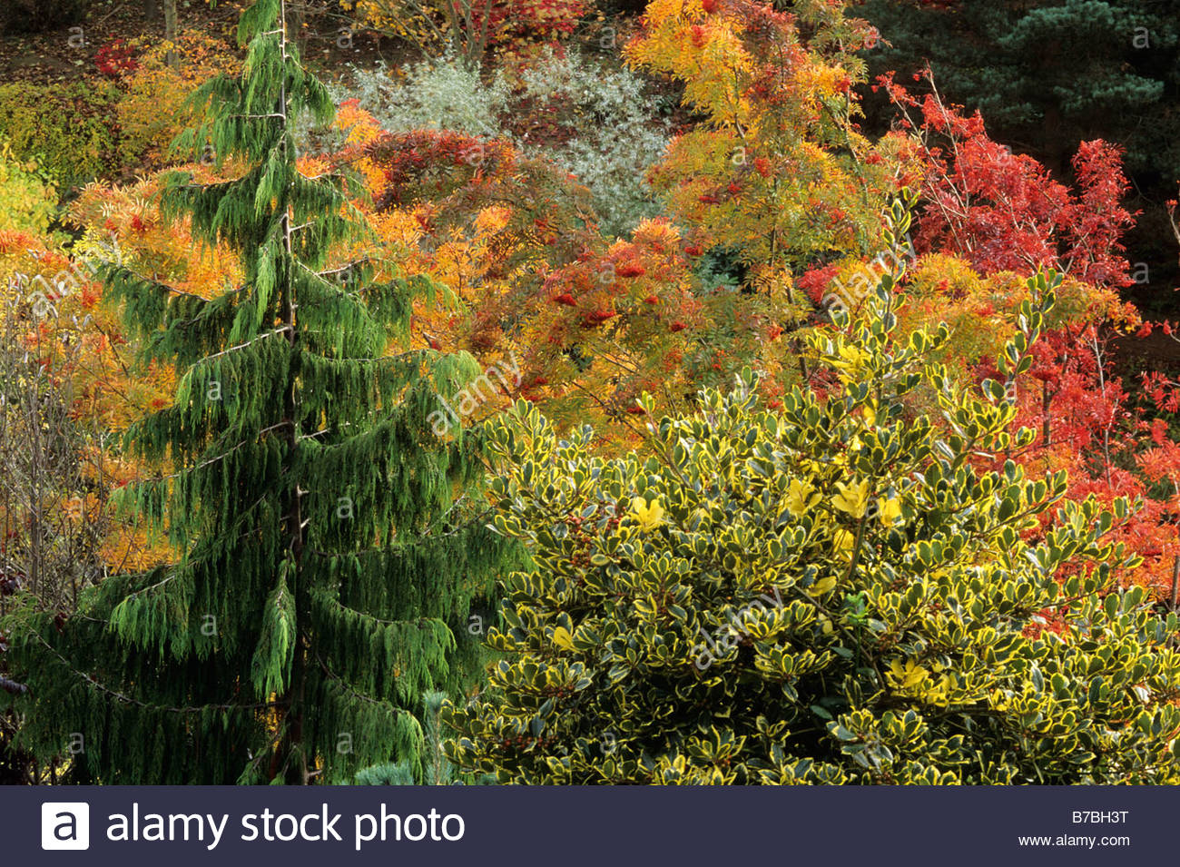 The dingle powys wales conifers and deciduous trees on for Garden deciduous trees