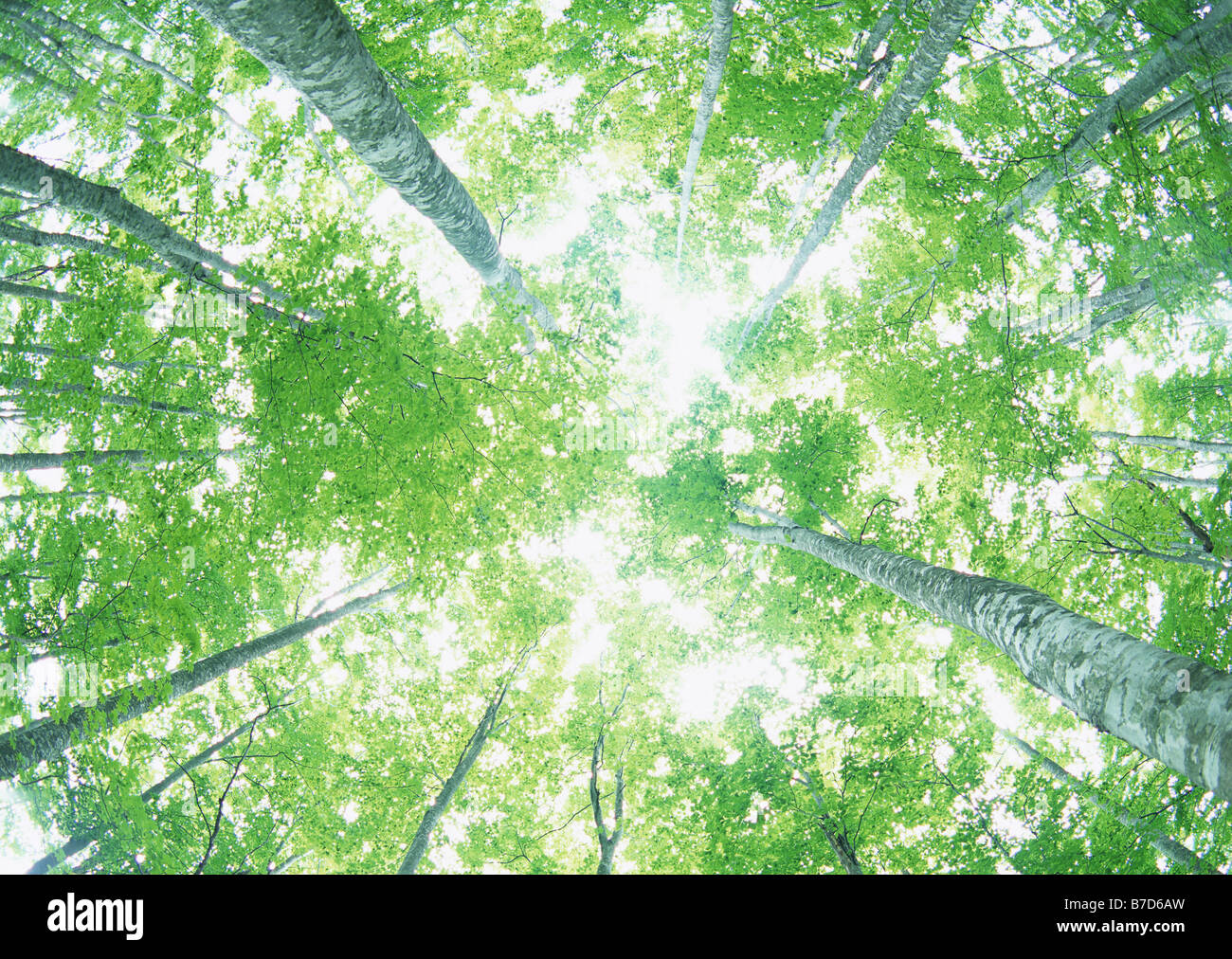 sunlight streaming through the leaves of trees stock photo
