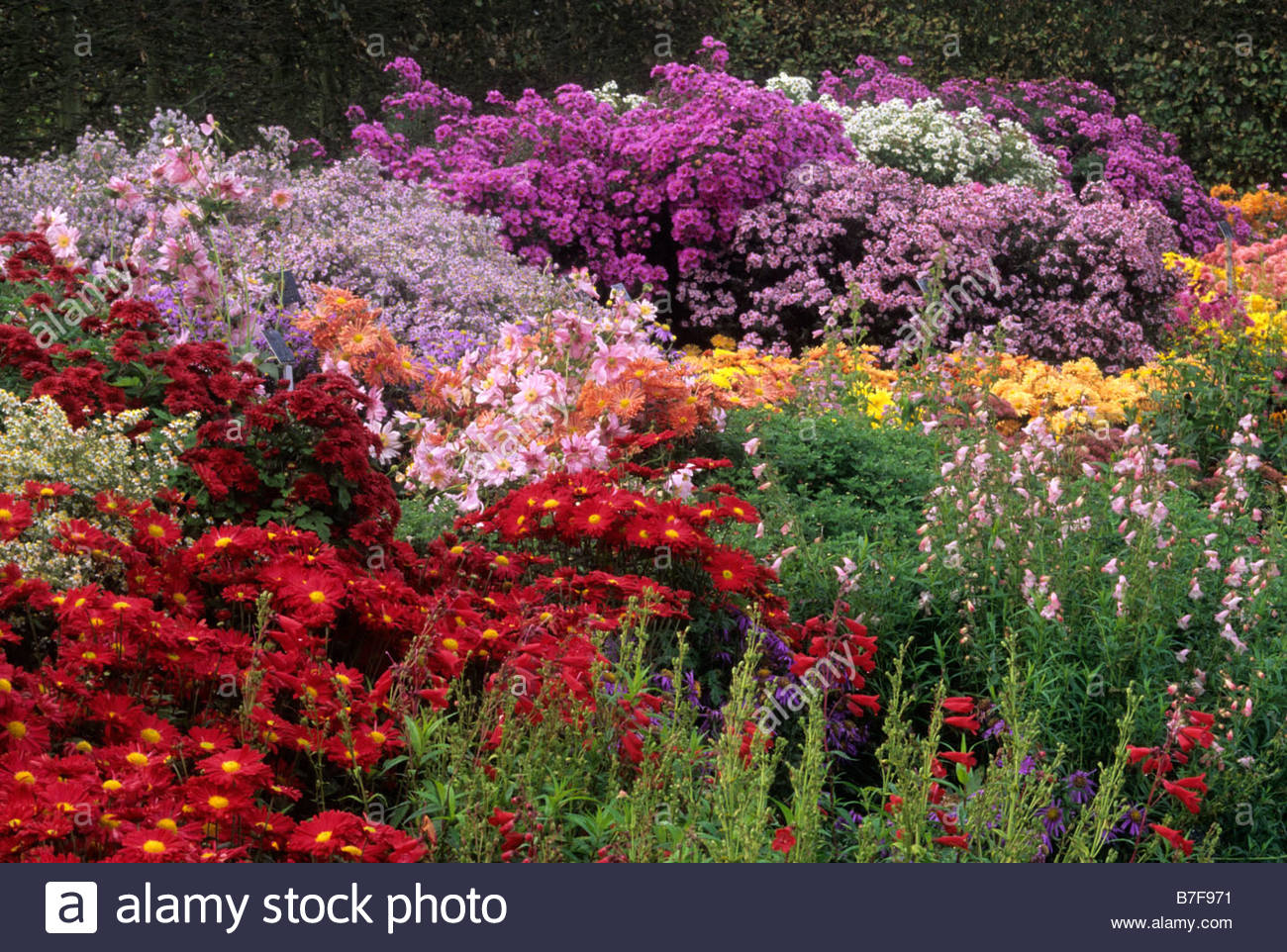 Rhs Wisley Surrey Late Summer Autumn Perennial Border With