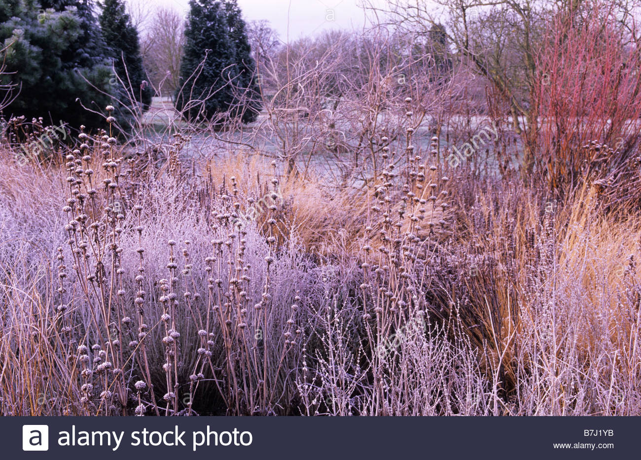 Piet oudolf borders at wisley stock photo royalty free for Piet oudolf fall winter spring summer fall