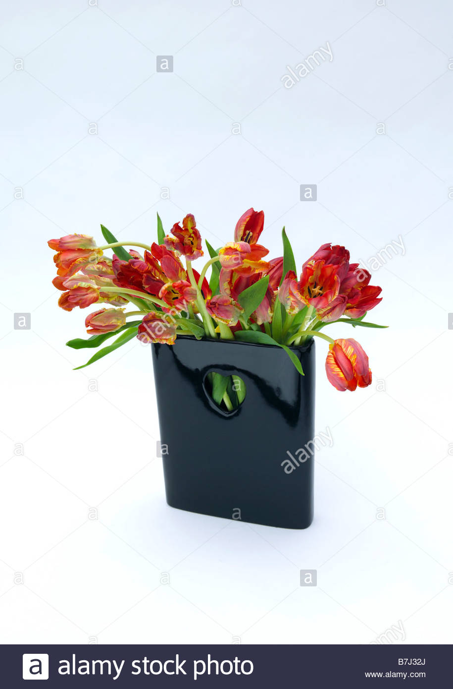 Red tulips in black glossy vase with cut out of a heart shape red tulips in black glossy vase with cut out of a heart shape white background reviewsmspy