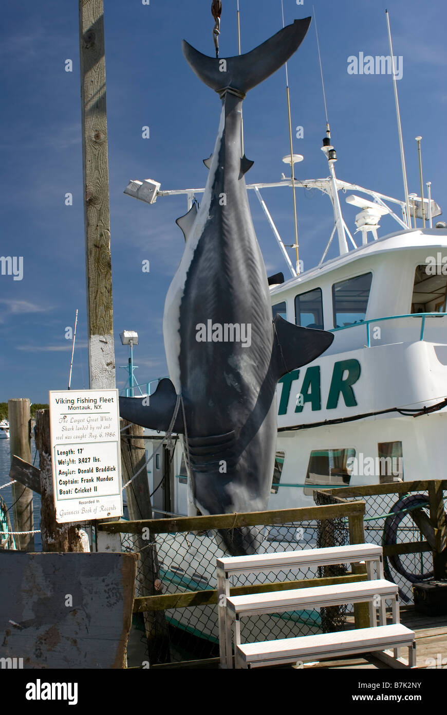 Replica of world 39 s biggest shark caught by rod and reel for Montauk shark fishing