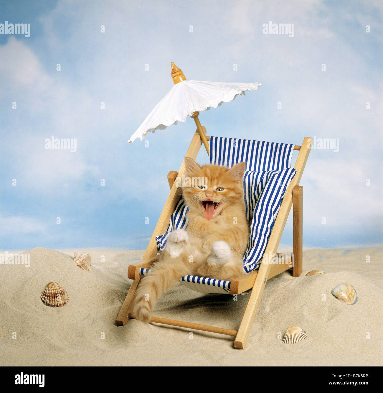 domestic cat kitten in deckchair on the beach Stock Royalty Free Image Alamy