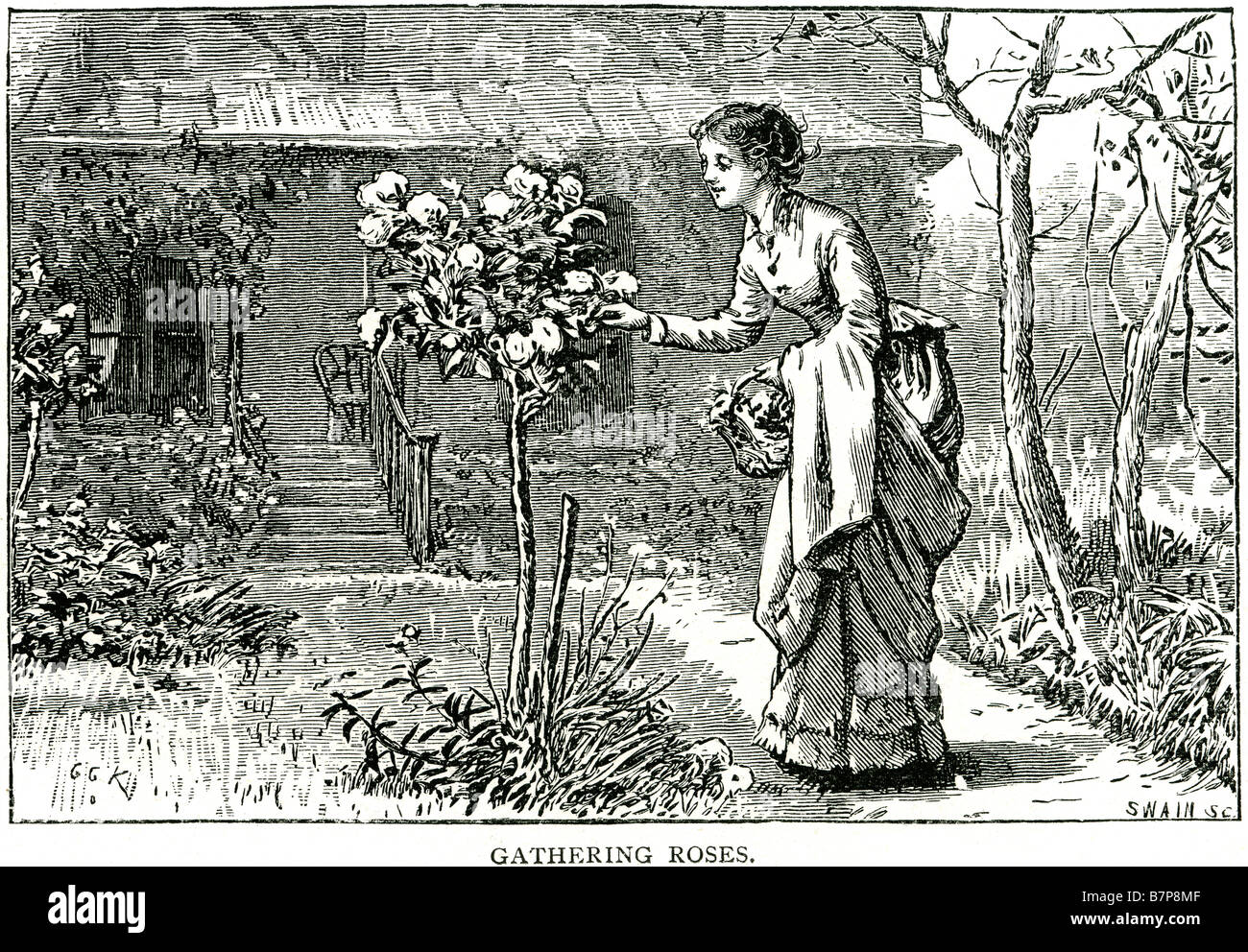 Gathering Roses Rose Bush Garden Lady Picking Flowers Traditional Clothing  House Decking Park Path Flower Summer Outside