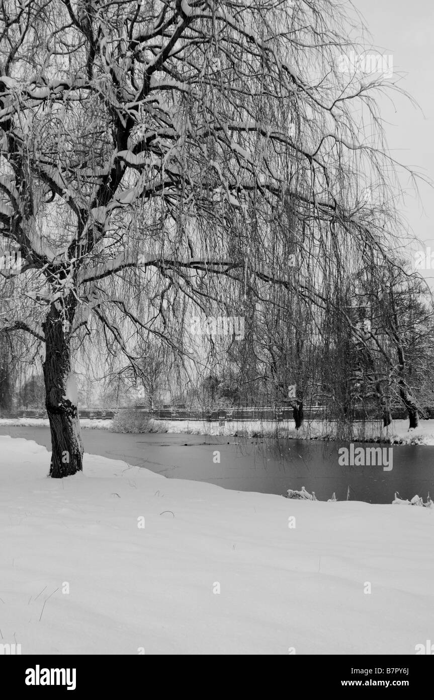 Weeping Willow Tree In Snow Home Park Surrey UK Stock Photo