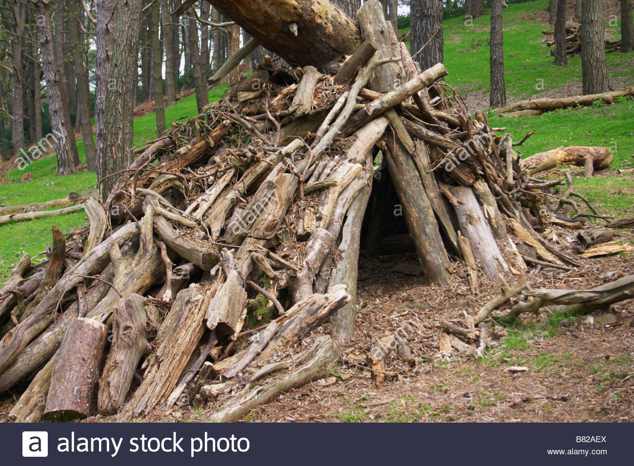 Tent With Shelter Trees : Alternative living eco friendly tent made from trees