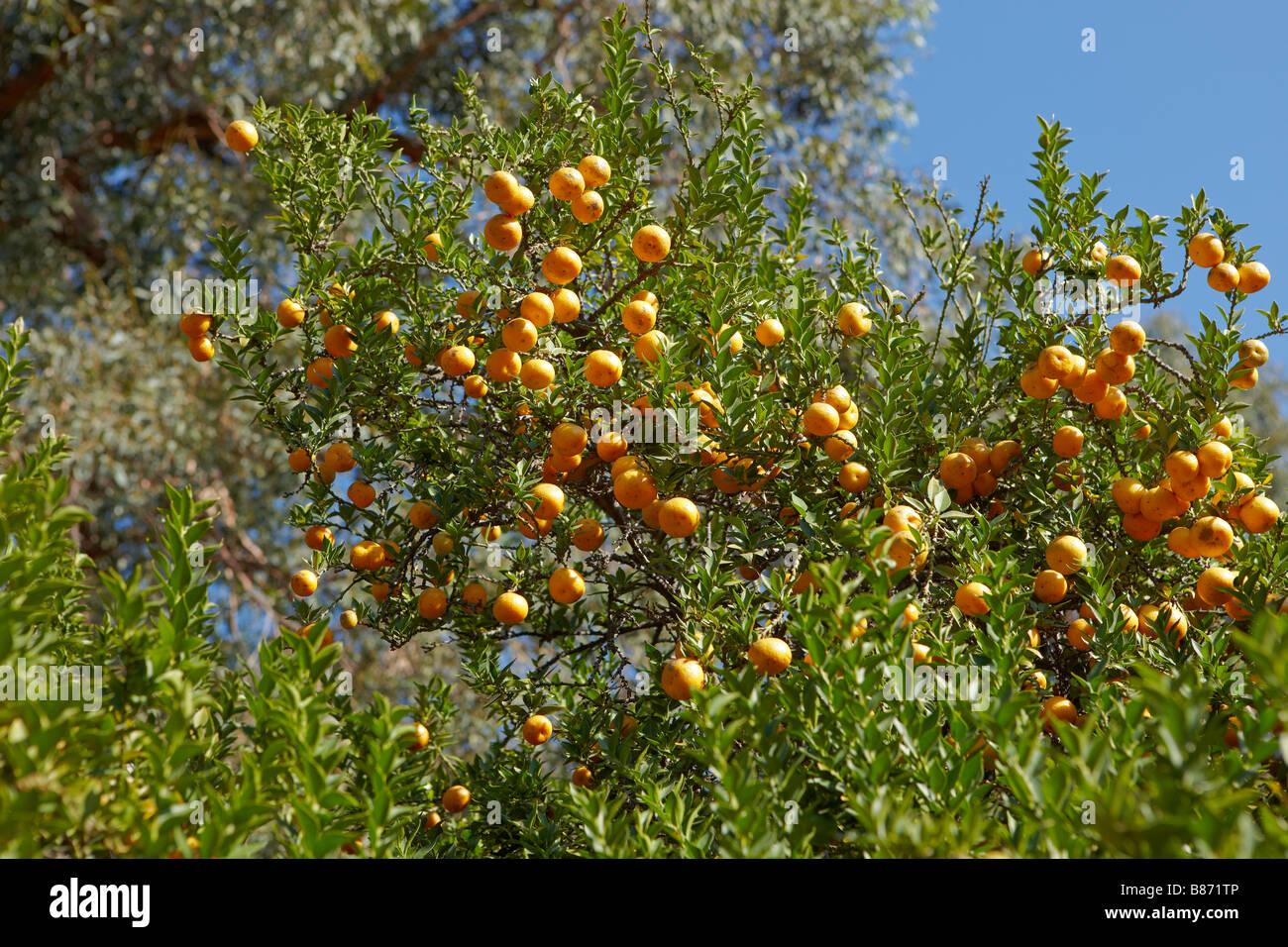 Los Angeles County Arboretum And Botanic Garden, Los Angeles, California,  USA