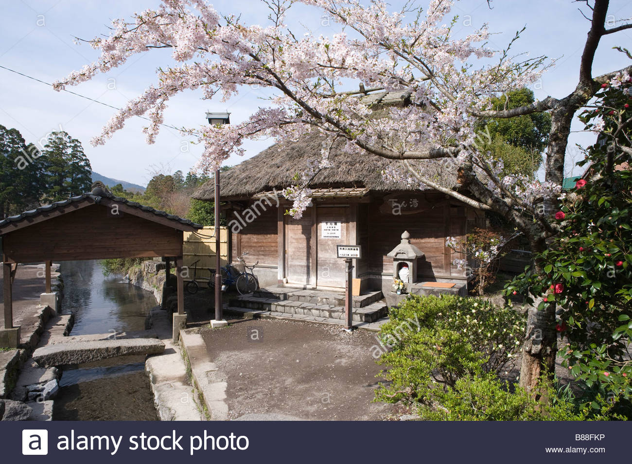 Yuhuin common hot spring shitan yu hot spring cherry blossoms flower yuhuin common hot spring shitan yu hot spring cherry blossoms flower yuhu oita kyushu japan mightylinksfo Images