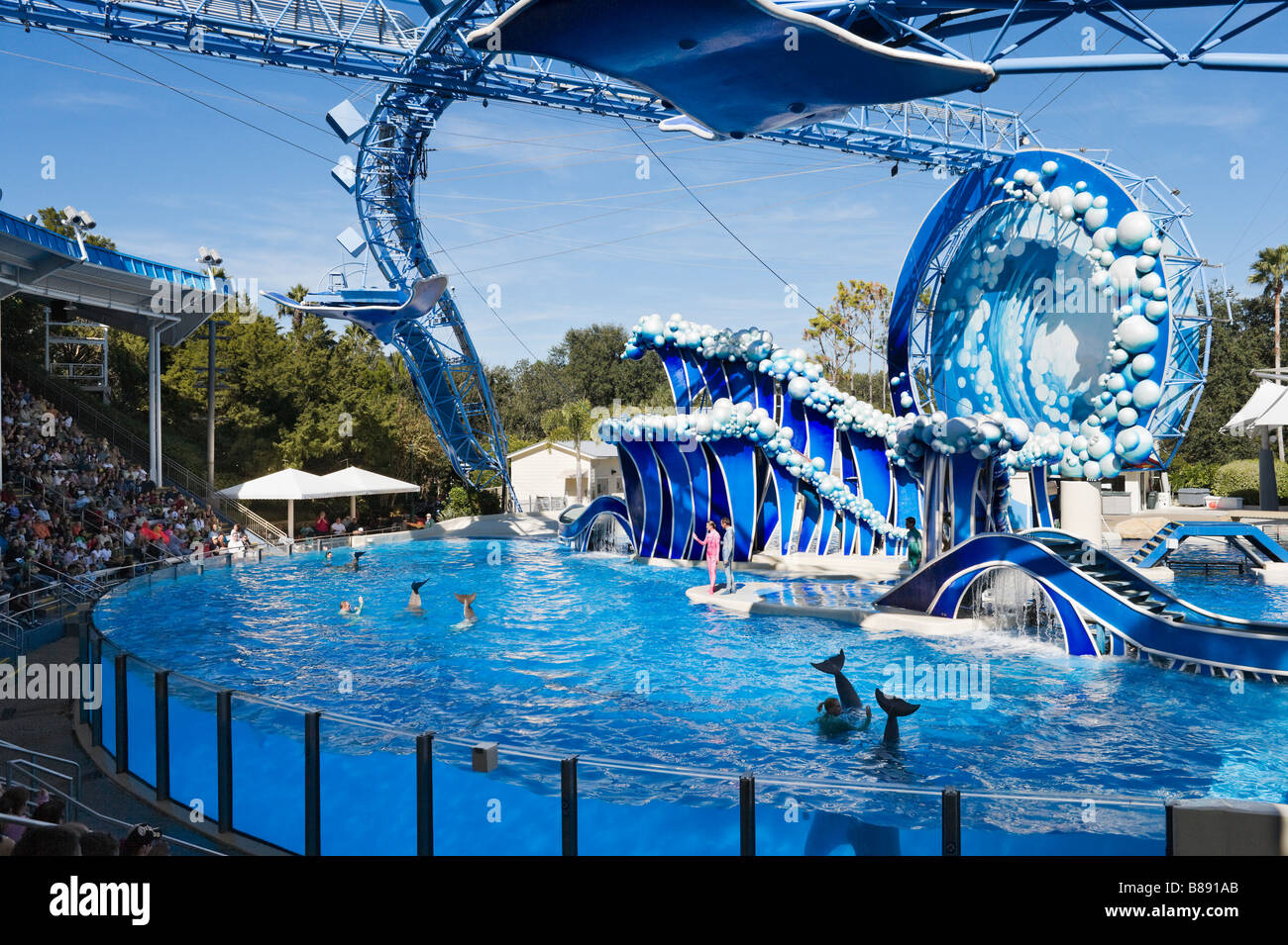 Whale and dolphin show at sea world orlando central for Pool show orlando florida