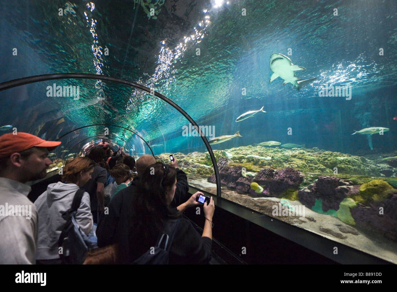 Freshwater aquarium fish orlando - Underwater Viewing Tunnel At The Shark Encounter Sea World Orlando Central Florida