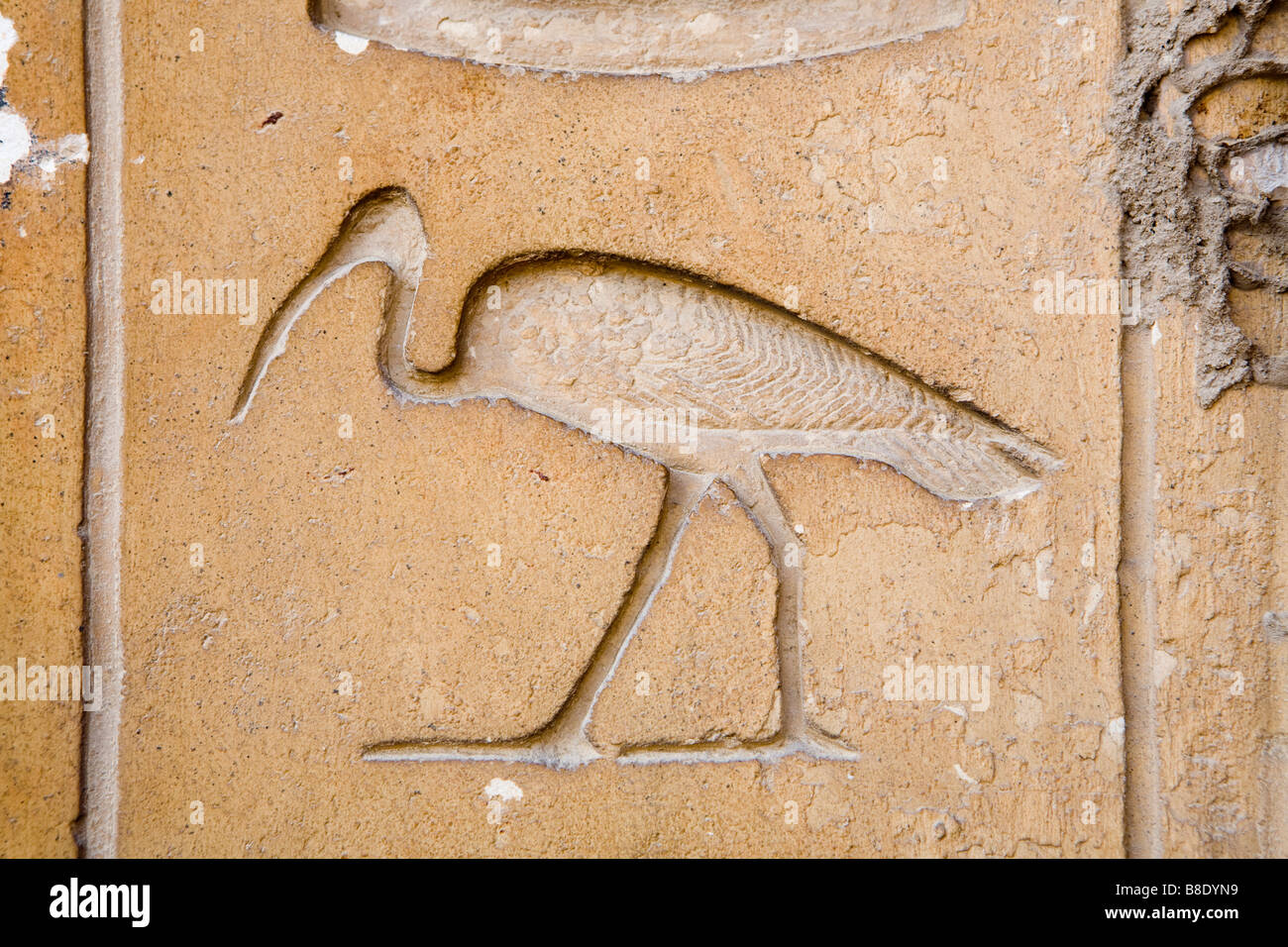 Hieroglyph of ibis bird from mastaba tomb of chief justice and hieroglyph of ibis bird from mastaba tomb of chief justice and vizier kagemni at sakkara egypt buycottarizona Choice Image