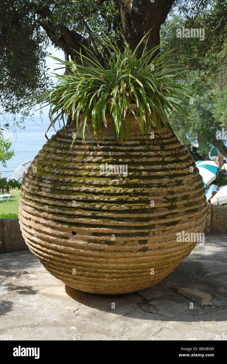 Large Stone Pot With Plants, Standing In Sun Under Trees On Patio Of Hotel  In Corfu