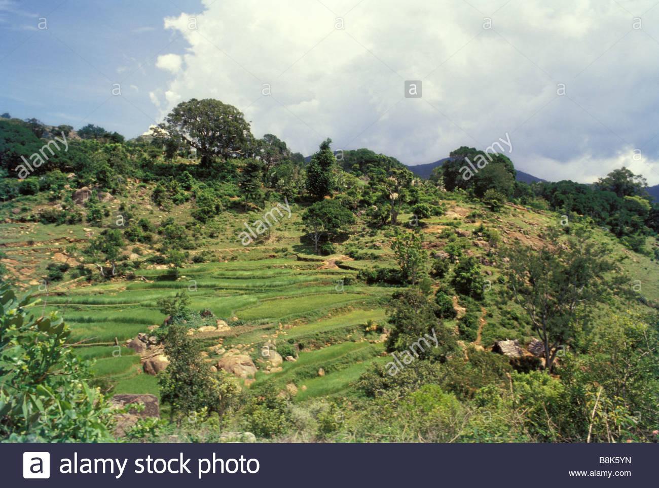 Terrace farming in kolli hills tamilnadu stock photo for Terrace farming in india