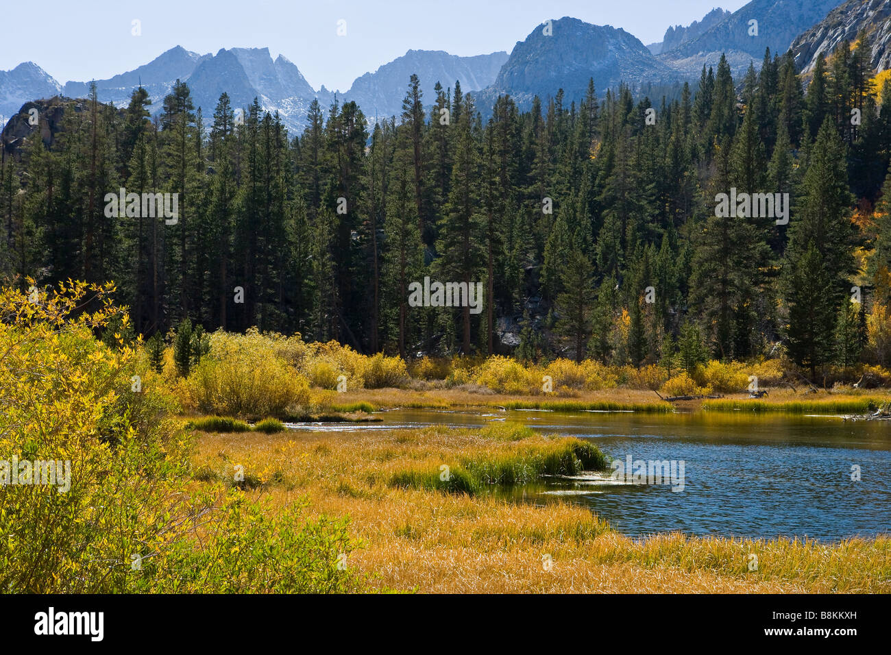 Meadow Along South Fork Of Bishop Creek Sierra Nevada Mountains - Mountains in the united states