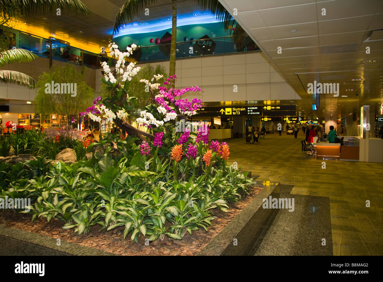 Orchid Gardens Singapore Changi Airport   Stock Image