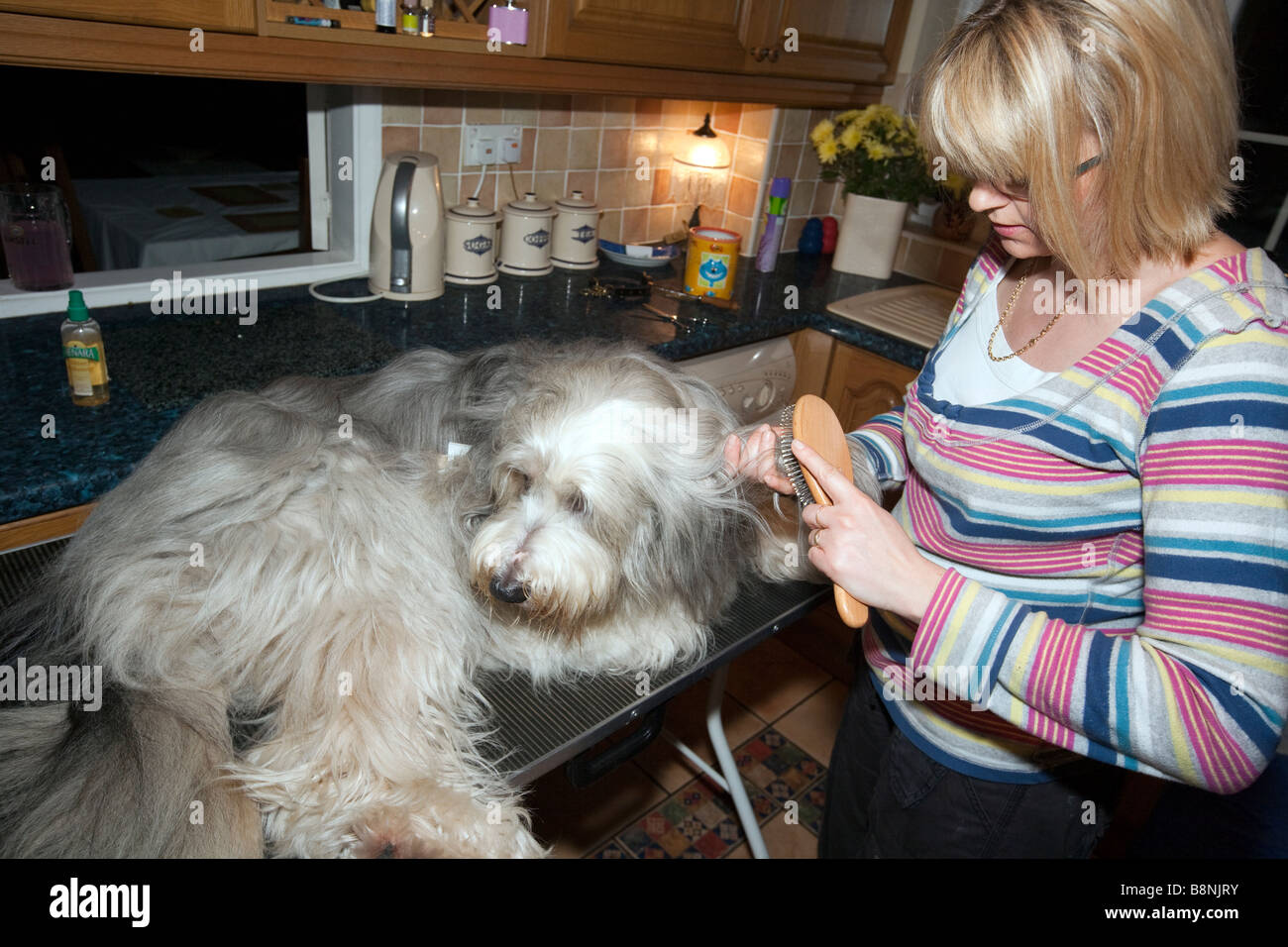 Bearded Collie Bathing Sequence In Grooming Parlour